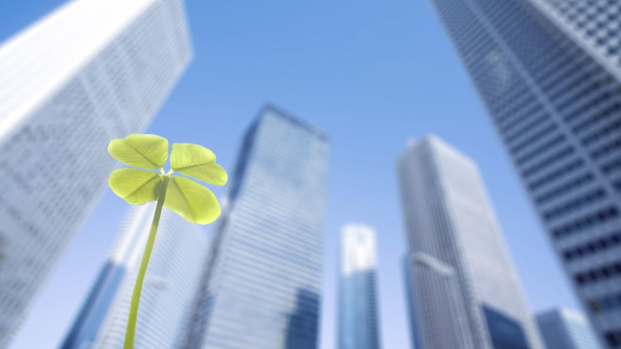 Green clover leaf against background of high-rise buildings