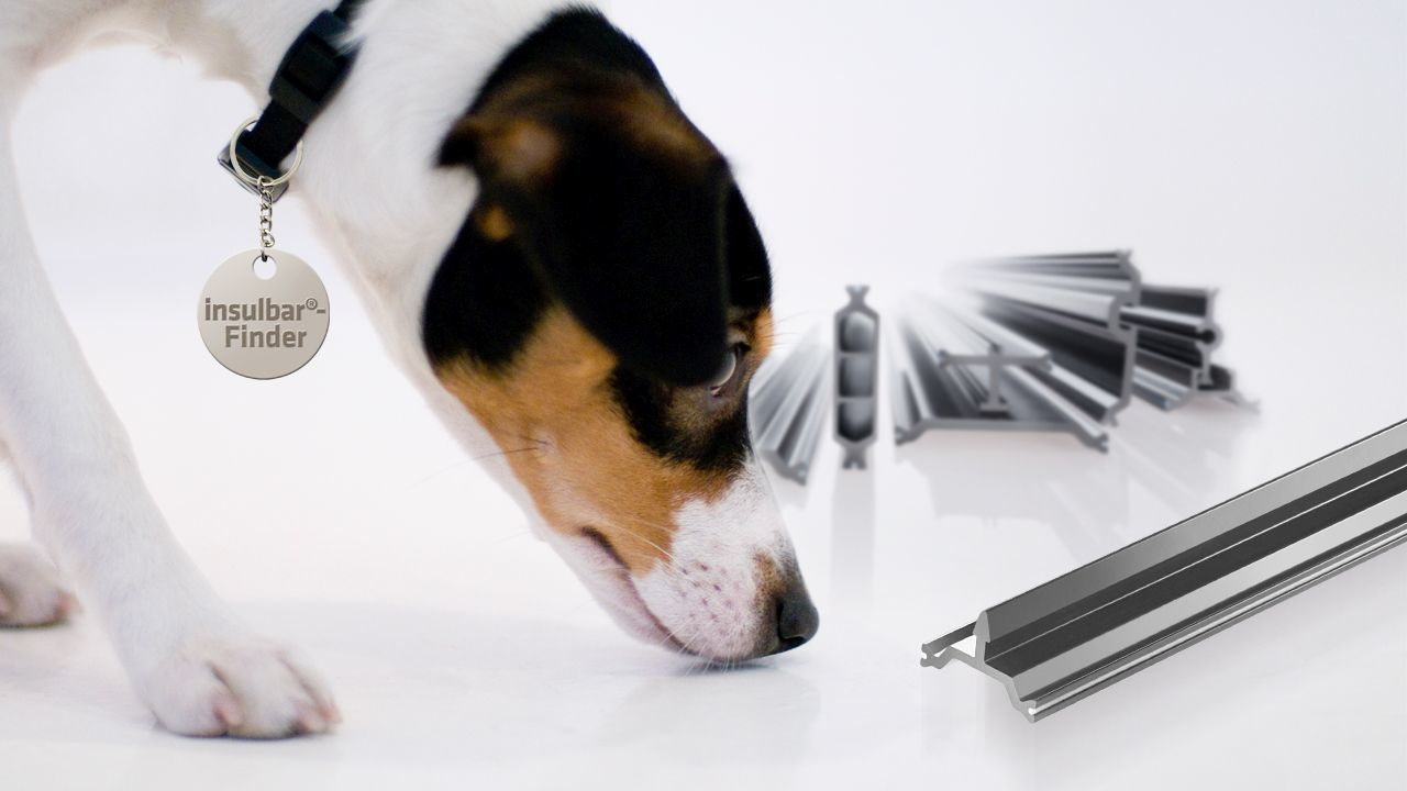 Jack Russell terrier sniffing and searching in front of insulbar profiles